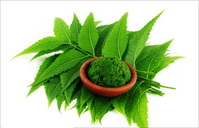 neem-leaves Natural Remedies For Oily Skin