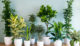 house-plants-to purify arir